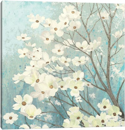 Dogwood Blossoms I Canvas Art Print