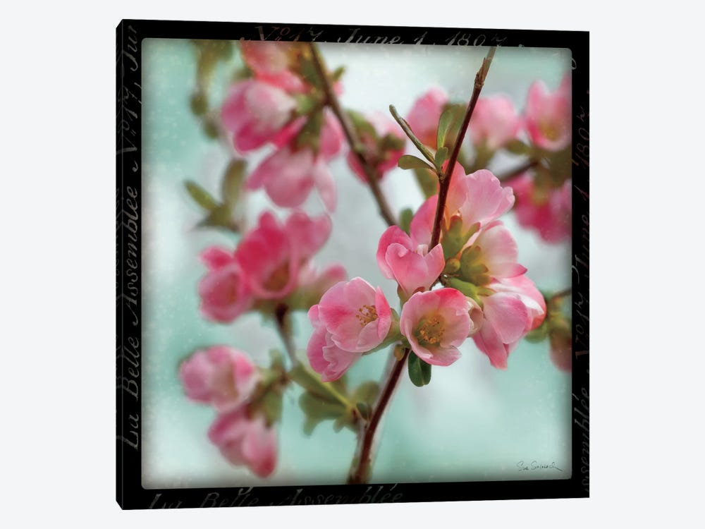 Quince Blossoms II by Sue Schlabach 1-piece Canvas Wall Art