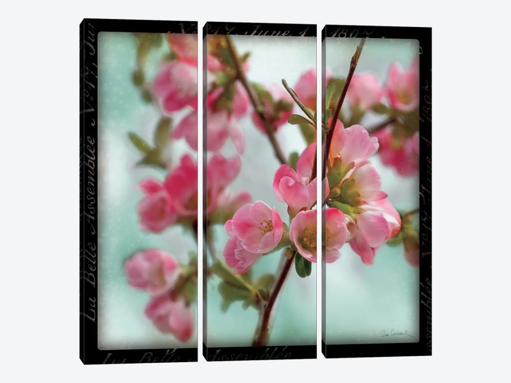 Quince Blossoms II by Sue Schlabach 3-piece Canvas Wall Art
