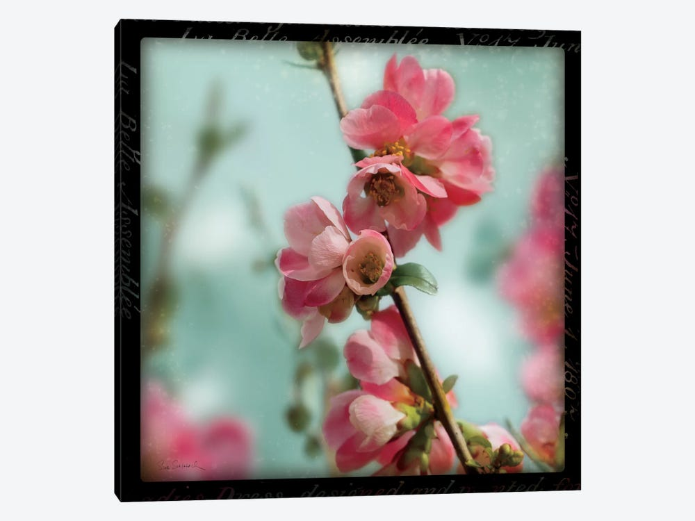 Quince Blossoms III by Sue Schlabach 1-piece Canvas Art