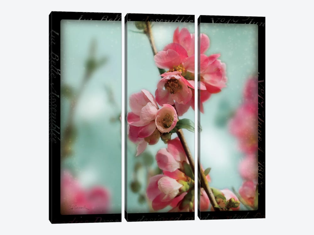 Quince Blossoms III by Sue Schlabach 3-piece Canvas Art