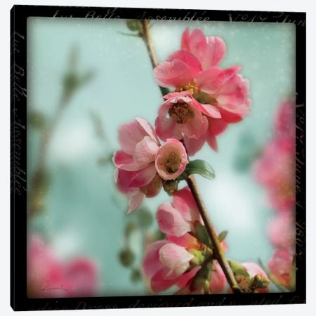 Quince Blossoms III Canvas Print #WAC1830} by Sue Schlabach Canvas Artwork