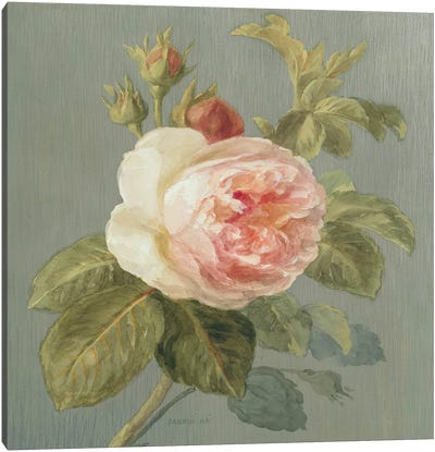 Heirloom Pink Rose Canvas Art Print