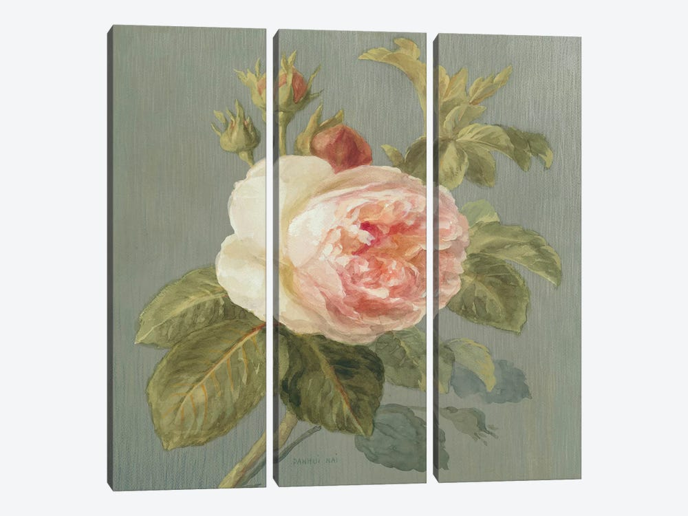 Heirloom Pink Rose by Danhui Nai 3-piece Canvas Artwork