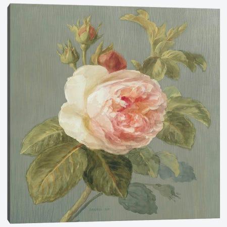 Heirloom Pink Rose Canvas Print #WAC183} by Danhui Nai Canvas Print
