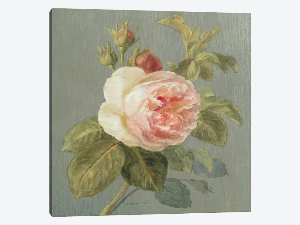 Heirloom Pink Rose by Danhui Nai 1-piece Canvas Wall Art