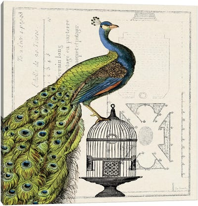Peacock Birdcage I Canvas Art Print