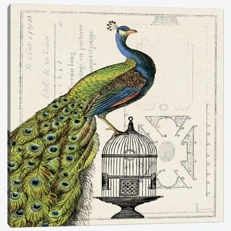 Peacock Birdcage I  Canvas Print #WAC1843} by Sue Schlabach Canvas Print
