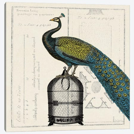 Peacock Birdcage II  Canvas Print #WAC1844} by Sue Schlabach Canvas Wall Art