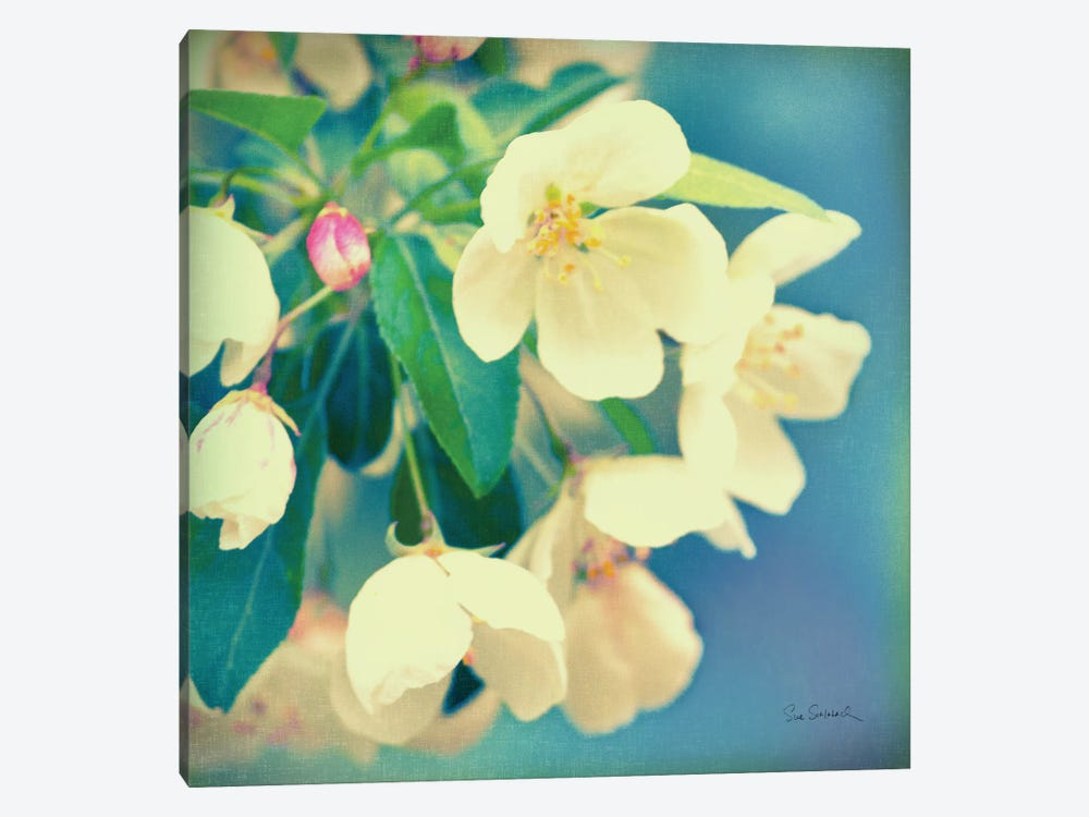Natures Apple Blossom  by Sue Schlabach 1-piece Canvas Wall Art