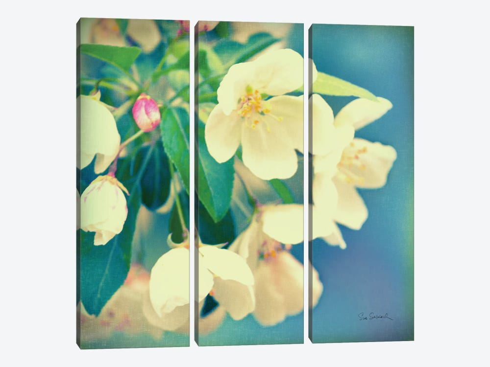 Natures Apple Blossom by Sue Schlabach 3-piece Canvas Artwork