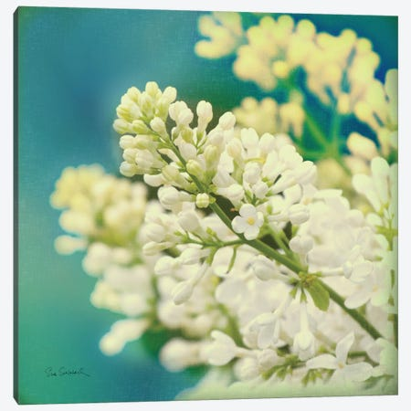 Natures Lilac Blossom  Canvas Print #WAC1846} by Sue Schlabach Canvas Art