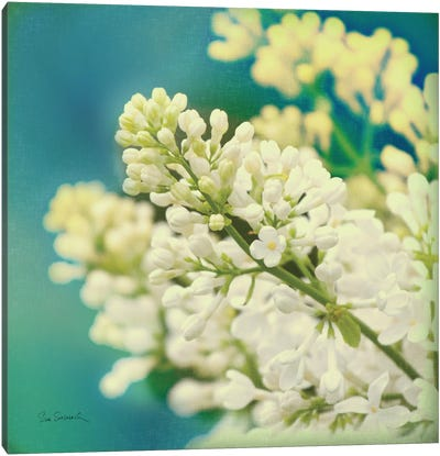 Natures Lilac Blossom  Canvas Art Print