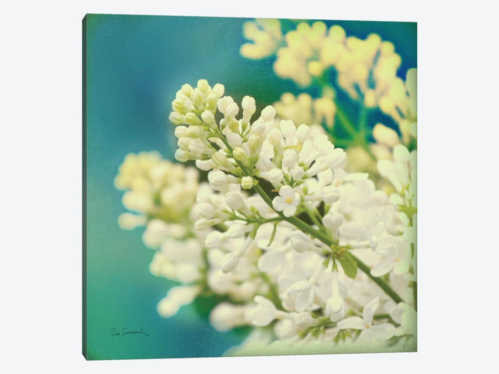 Natures Lilac Blossom  by Sue Schlabach 1-piece Canvas Print
