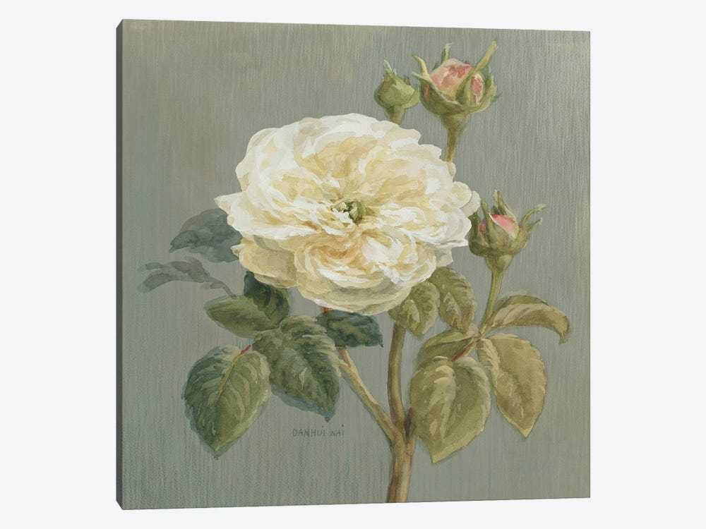 Heirloom White Rose by Danhui Nai 1-piece Canvas Print