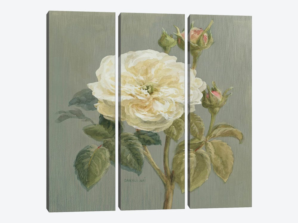 Heirloom White Rose by Danhui Nai 3-piece Canvas Print