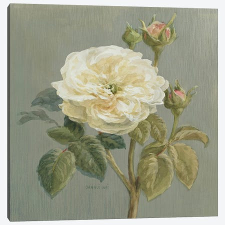 Heirloom White Rose Canvas Print #WAC184} by Danhui Nai Canvas Artwork