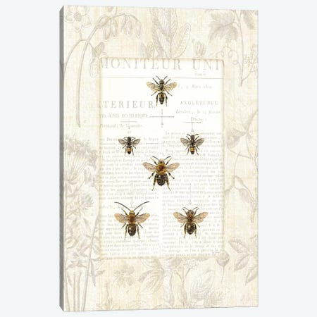 Bee Botanical  Canvas Print #WAC1864} by Sue Schlabach Canvas Art