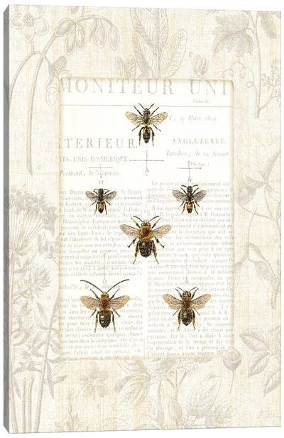 Bee Botanical  Canvas Print #WAC1864