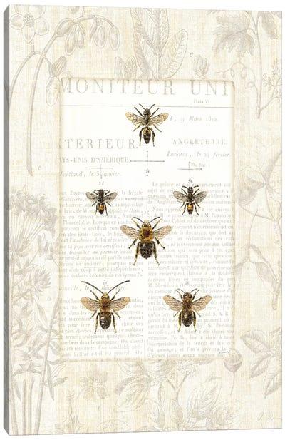 Bee Botanical  Canvas Art Print