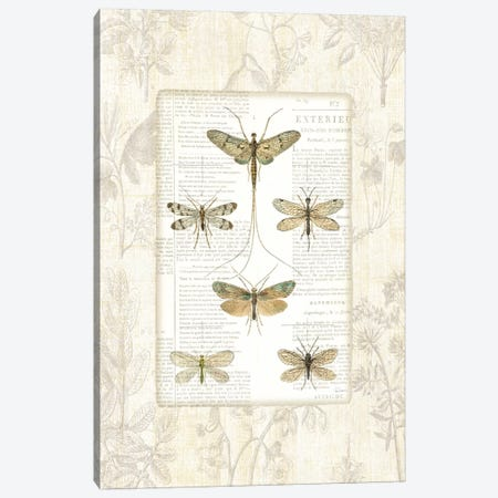 Dragonfly Botanical  Canvas Print #WAC1865} by Sue Schlabach Canvas Artwork