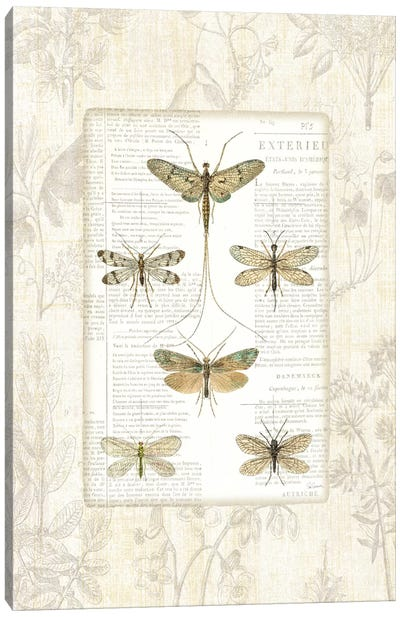 Dragonfly Botanical  Canvas Art Print