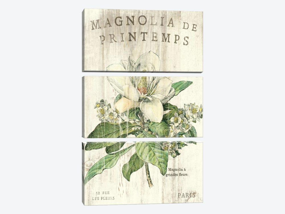 Magnolia de Printemps  by Sue Schlabach 3-piece Canvas Print