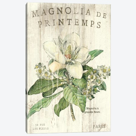 Magnolia de Printemps  Canvas Print #WAC1866} by Sue Schlabach Canvas Wall Art