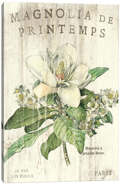 Magnolia de Printemps  Canvas Art Print