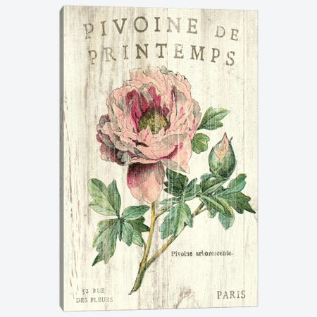 Pivoine de Printemps  Canvas Print #WAC1869} by Sue Schlabach Art Print