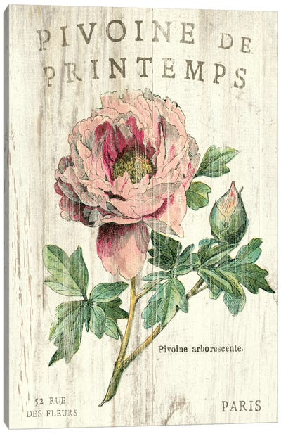 Pivoine de Printemps  Canvas Art Print