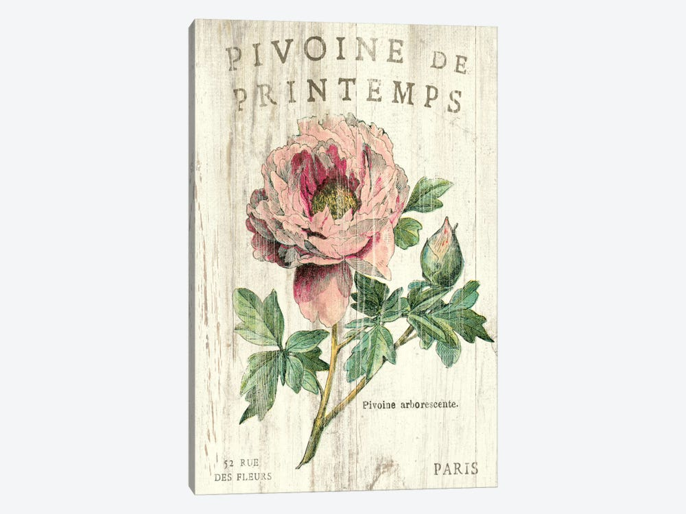 Pivoine de Printemps  by Sue Schlabach 1-piece Canvas Art
