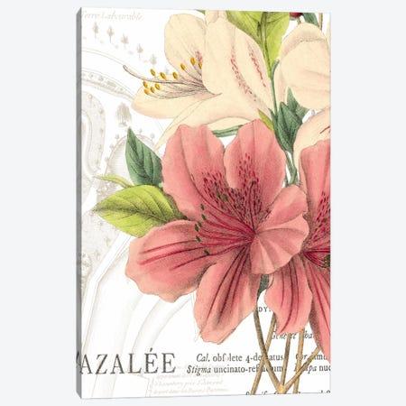 Azalee Jardin I Canvas Print #WAC1875} by Wild Apple Portfolio Canvas Art Print