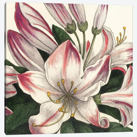 Botanique Square II Canvas Print #WAC1882} by Wild Apple Portfolio Art Print