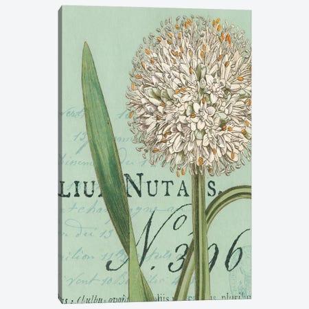 Botanique Bleu II Canvas Print #WAC1884} by Wild Apple Portfolio Canvas Art