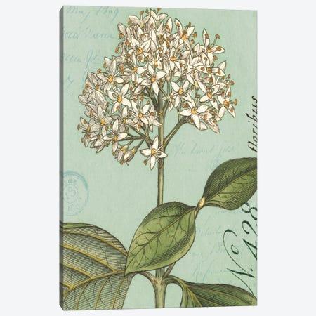 Botanique Bleu IV Canvas Print #WAC1886} by Wild Apple Portfolio Canvas Art