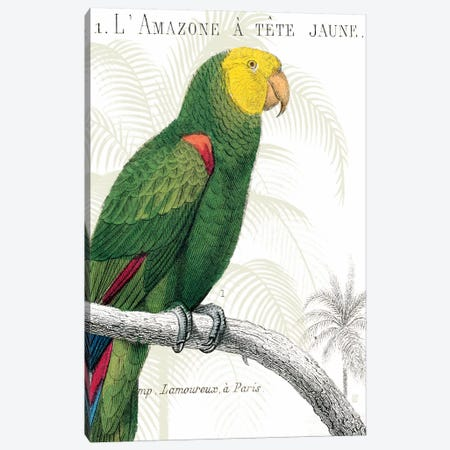 Parrot Botanique I Canvas Print #WAC1892} by Wild Apple Portfolio Canvas Art