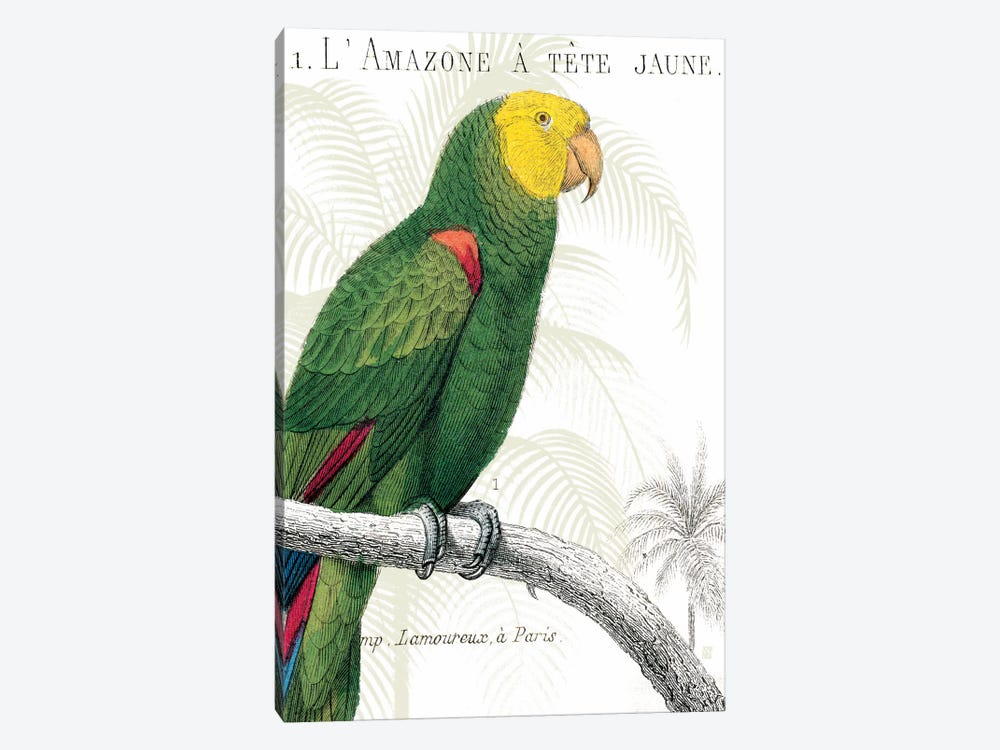 Parrot Botanique I by Wild Apple Portfolio 1-piece Canvas Artwork