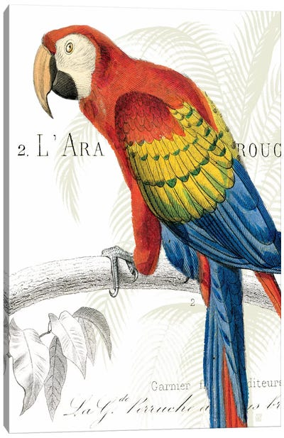 Parrot Botanique II Canvas Print #WAC1893