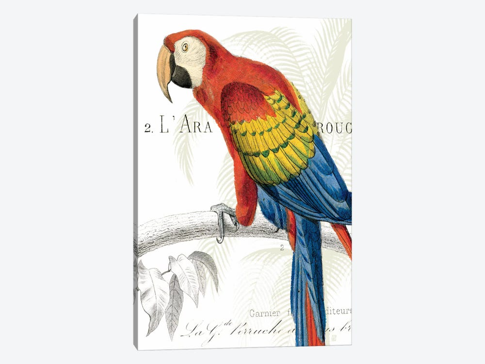 Parrot Botanique II by Wild Apple Portfolio 1-piece Canvas Art Print