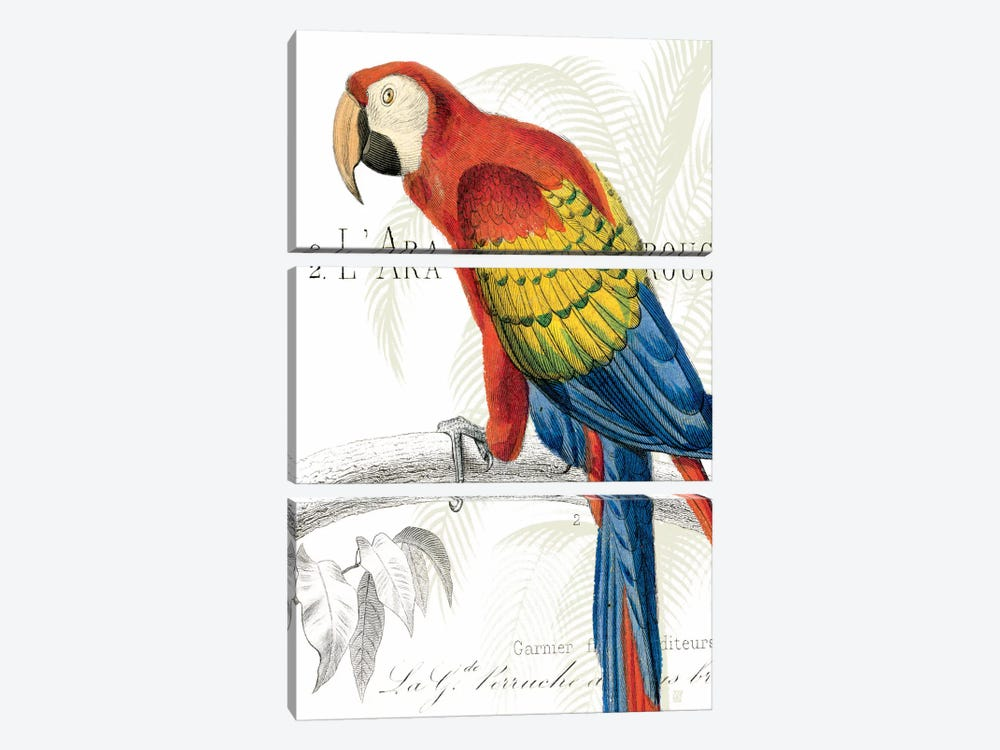 Parrot Botanique II by Wild Apple Portfolio 3-piece Canvas Art Print
