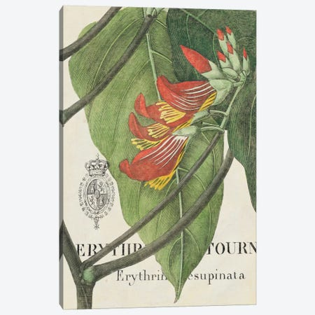 Botanique Tropicale I Canvas Print #WAC1904} by Wild Apple Portfolio Canvas Art Print
