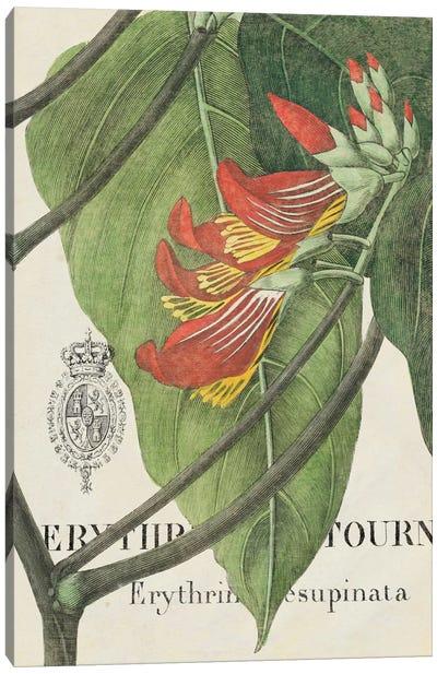 Botanique Tropicale I Canvas Print #WAC1904
