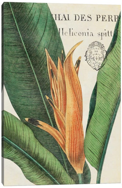 Botanique Tropicale II Canvas Art Print