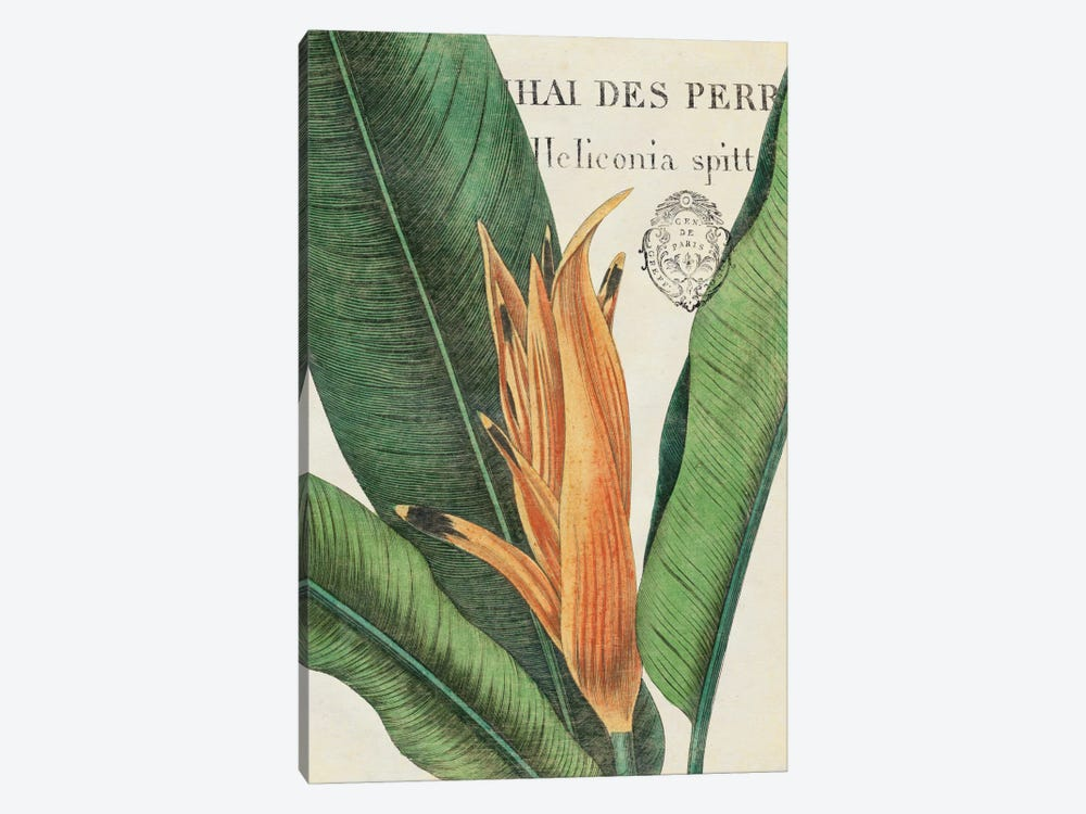 Botanique Tropicale II by Wild Apple Portfolio 1-piece Art Print