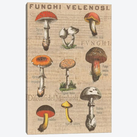 Funghi Velenosi I Canvas Print #WAC1971} by Wild Apple Portfolio Art Print