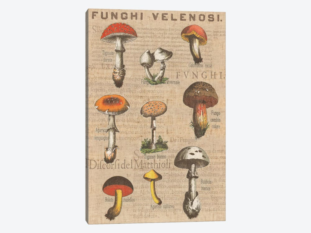 Funghi Velenosi I by Wild Apple Portfolio 1-piece Canvas Artwork