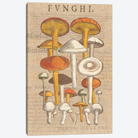 Funghi Velenosi II Canvas Print #WAC1972} by Wild Apple Portfolio Canvas Print