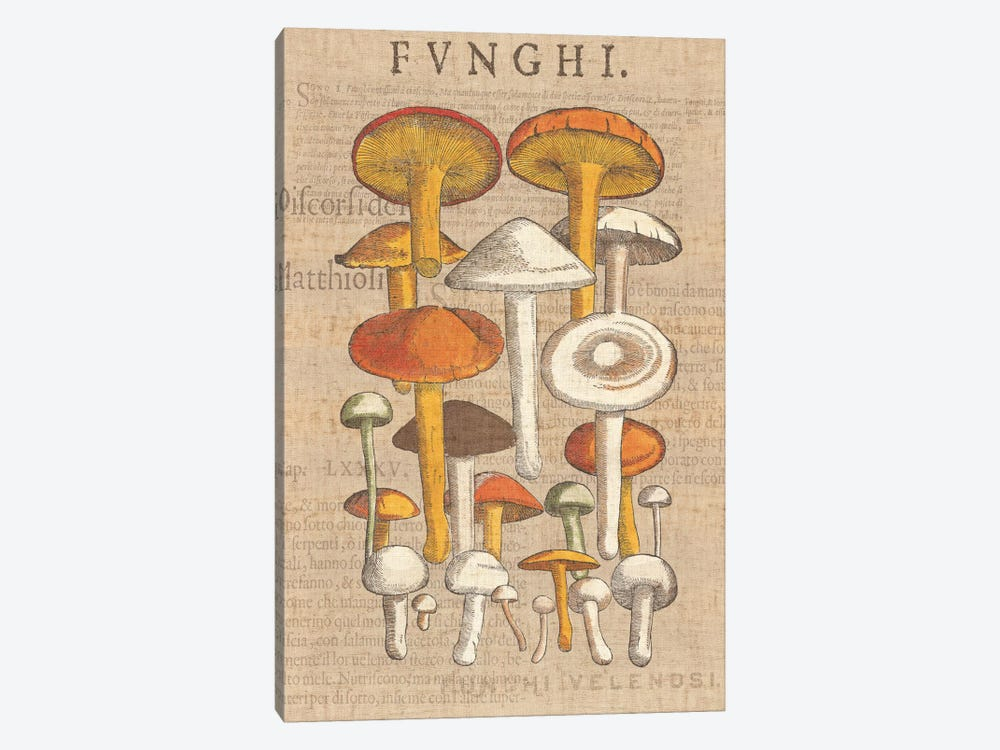 Funghi Velenosi II by Wild Apple Portfolio 1-piece Canvas Print