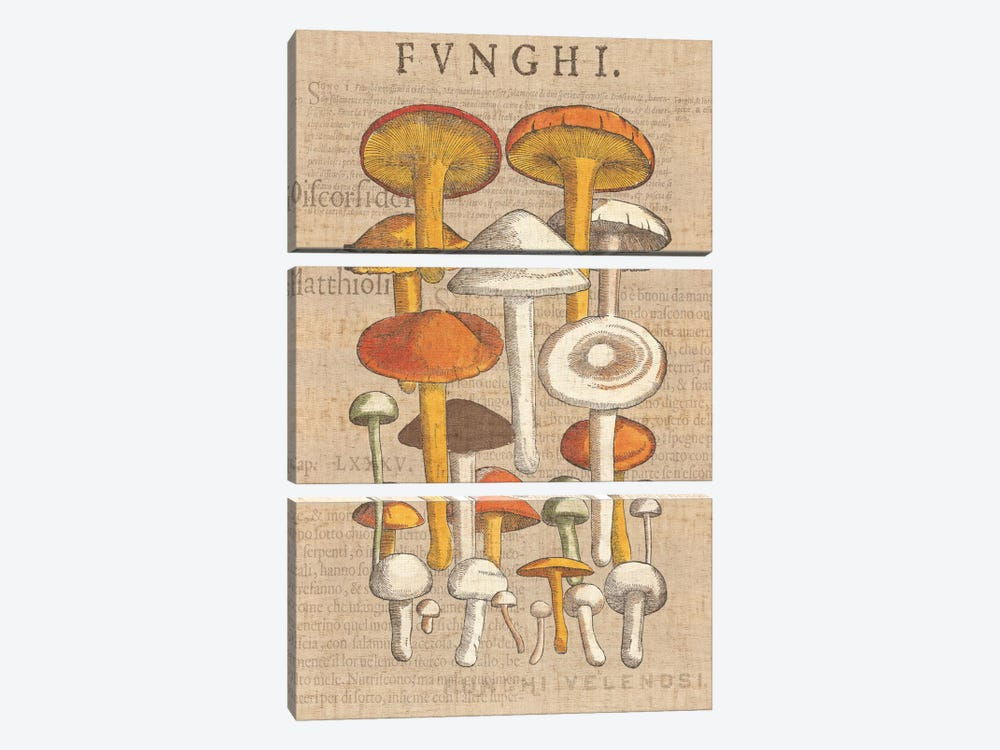 Funghi Velenosi II by Wild Apple Portfolio 3-piece Canvas Art Print